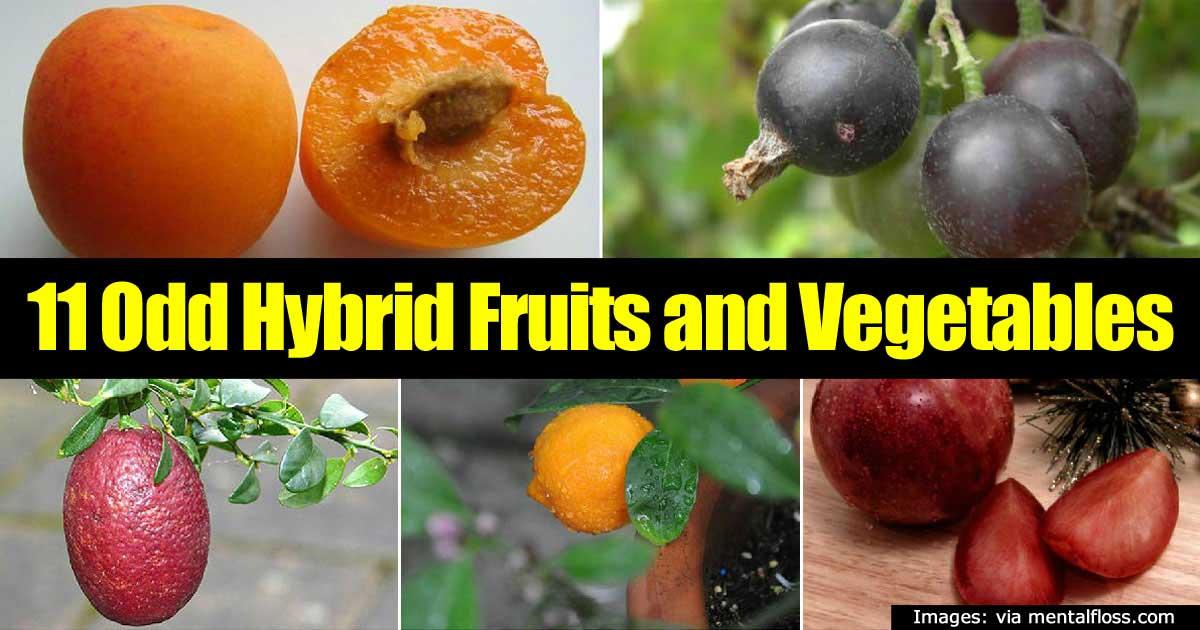 odd-fruits-veggies-43020151380