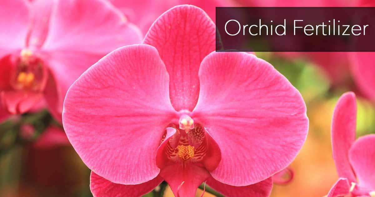 orchid fertilizer