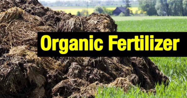 organic fertilizer good old compost