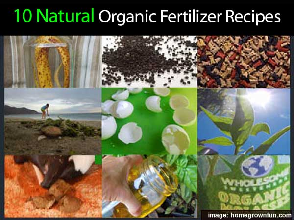 options for organic fertilizers