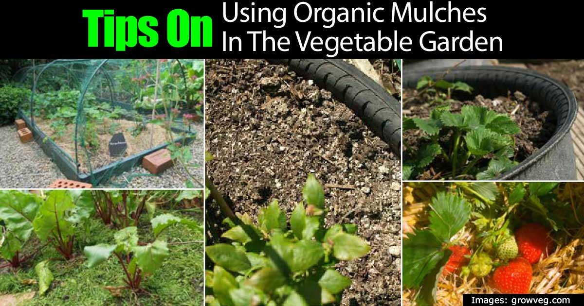 organic-mulches-garden-22820151214