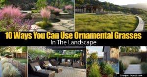 assorted ornamental grasses