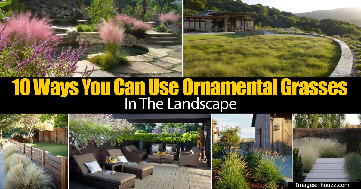 Ornamental grasses 93020152148g using ornamental grasses in the landscape workwithnaturefo