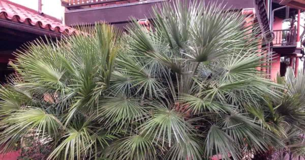 Outdoor palms need a palm fertilizer designed for their needs.
