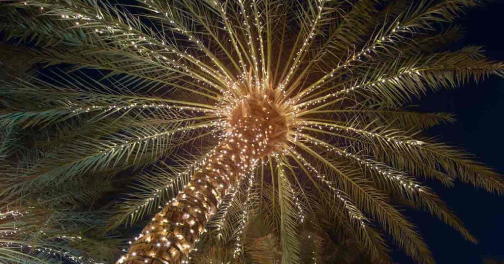 palm tree lighting using led garden lights