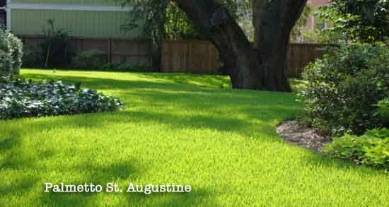 St Augustine Grass Care And Lawn Maintenance Schedule