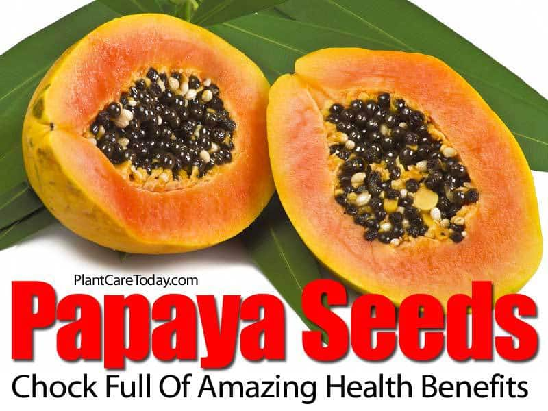 papaya-seeds-benefits-083114