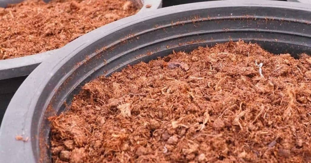 dry peat moss in a large pot