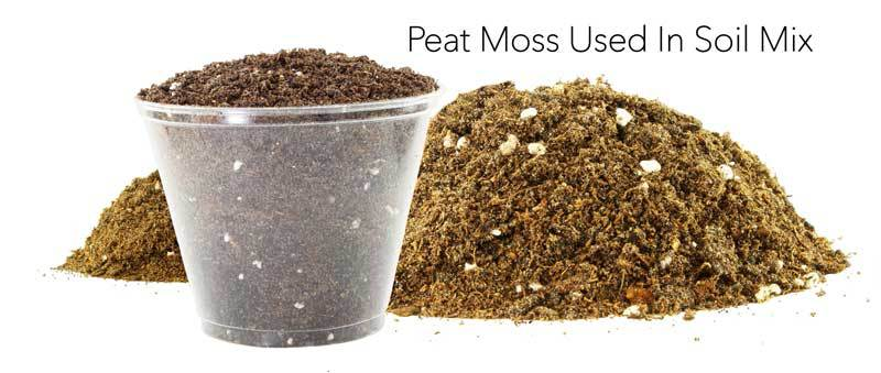 What is peat moss how to best use peatmoss in the garden for Soil and its uses