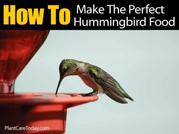 hummingbird feeding on the Perfect food