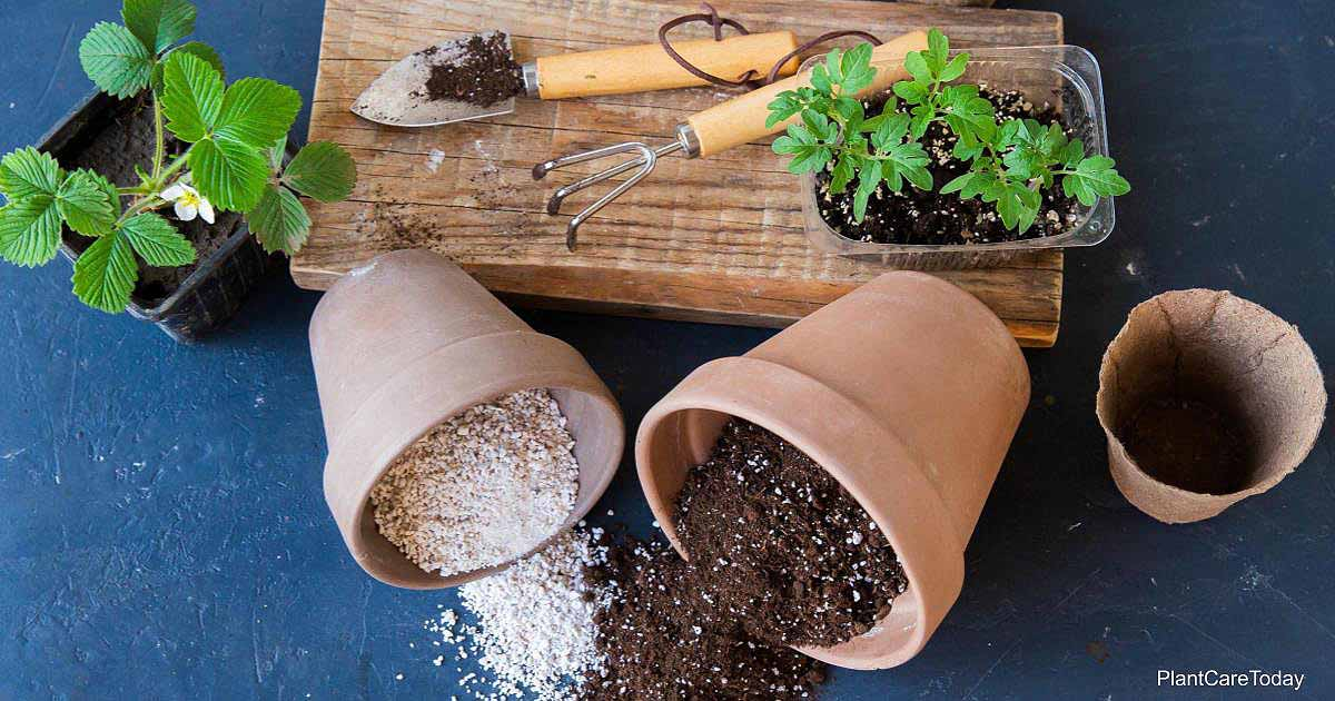 perlite and vermiculite in pots spilled on a potting bench