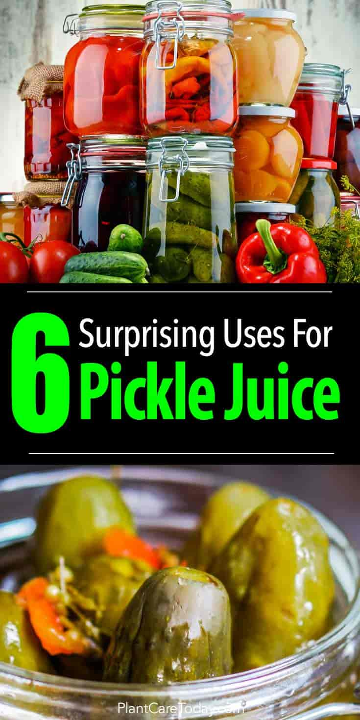 Most people think of pickle juice as a throwaway leftover product, but it can help with constipation, and the garden