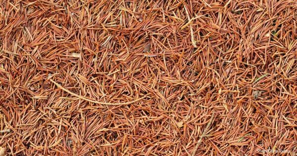 mulch made from pine needles