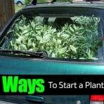 Great Ways To Start A Plant Headache