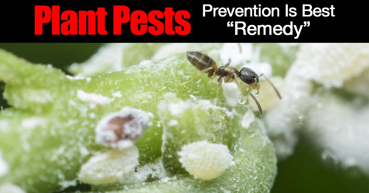 houseplant pests prevention the best remedy