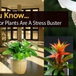 Did You Know Indoor Plants Are A Stress Buster?