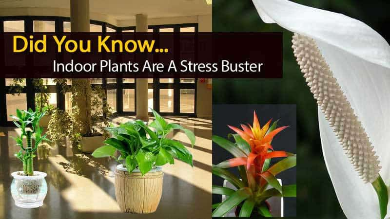 planta-anti-estrés-120613