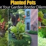 Planted Pots – Solve Your Garden Border Dilemmas