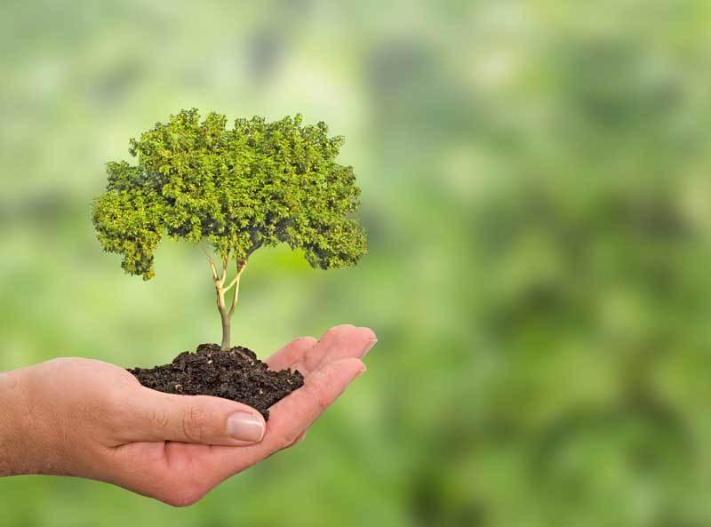 planting-tree-08312015