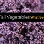 Planting Fall Vegetables: What Seeds Should You Plant Now?