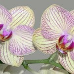 Gift Plants: Tips On Selecting Orchids, Bromeliads, Palms and More