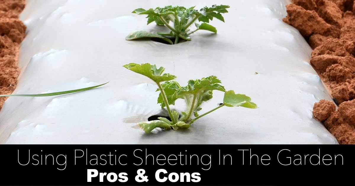 How To Use Plastic Sheeting In The Garden Pros Amp Cons
