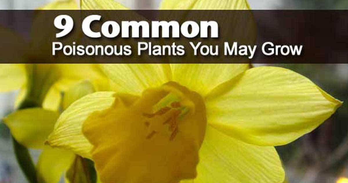 poisonous-plants-12312015