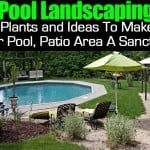 Pool Landscape: Plants and Ideas To Make Your Pool, Patio Area A Sanctuary