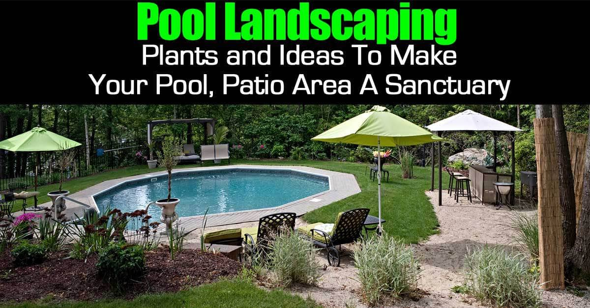 Pool landscape plants and ideas to make your pool patio for Landscape design for pool areas