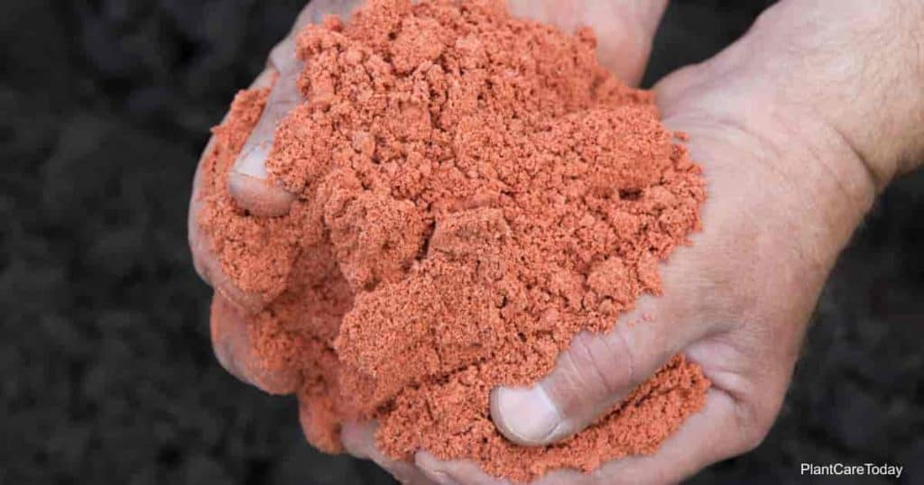 Potash fertilizer held in a hand