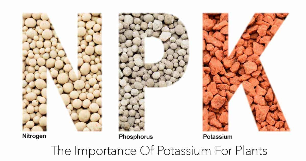 the importance of potassium for plants