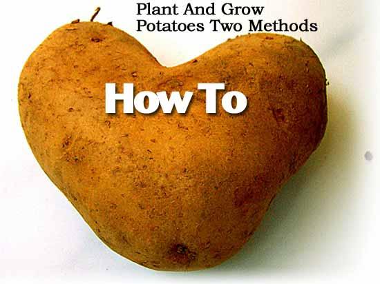 potato-2-041113