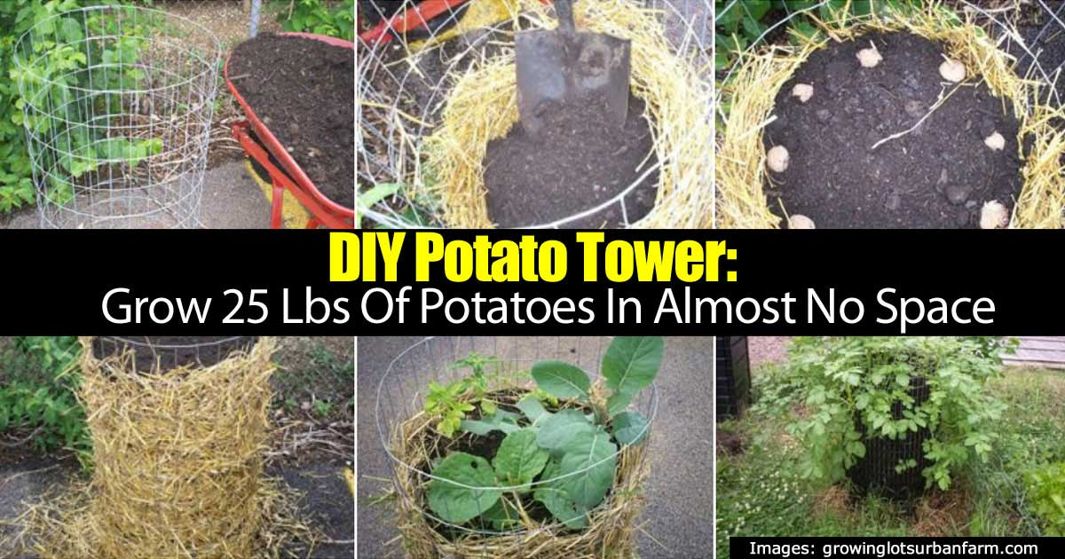 Diy Potato Tower Grow 25 Lbs Of Potatoes In Almost No Space