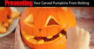 prevent carved pumpkins from rottting
