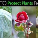 Frost Protection: How To Protect Plants From Frost