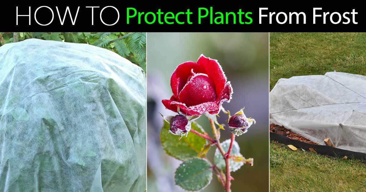 protect plants from frost