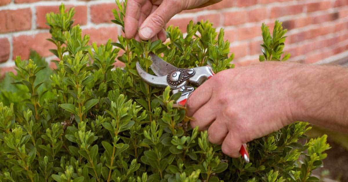 pruner use selecting