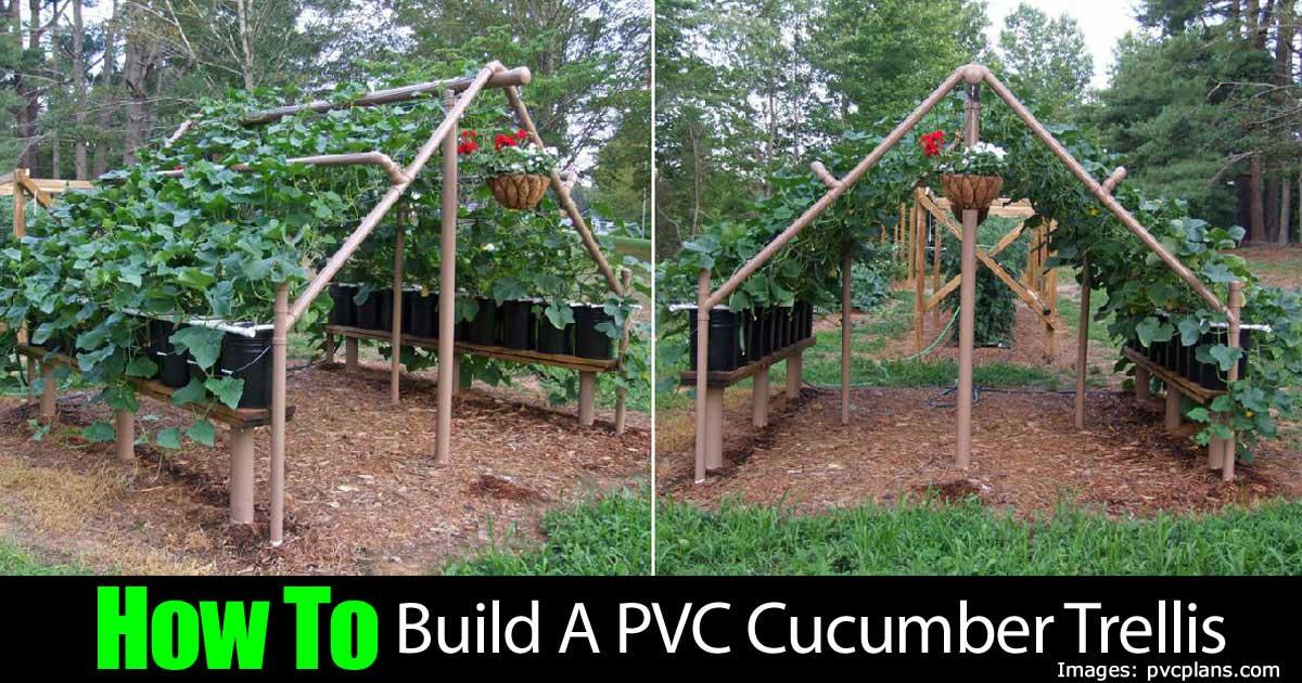 How to build a pvc cucumber trellis How to build a trellis