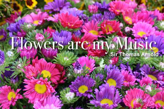 Flowers are my music