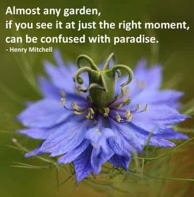 quote - almost any garden