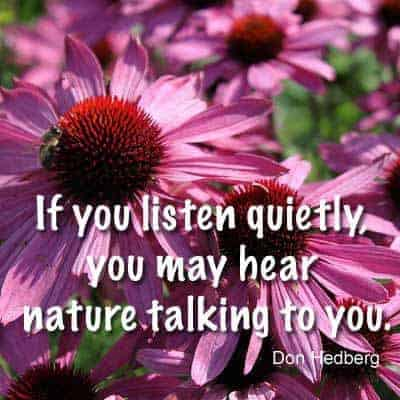 Quote - If You Listen Quietly...