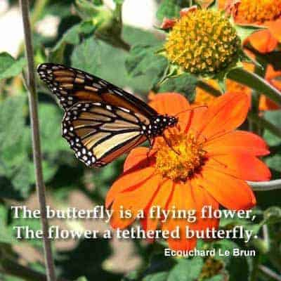 Quote - The butterfly is a flying flower...