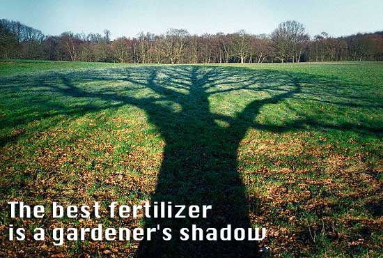 Quote - The BEST fertilizer is a gardener's shadow!