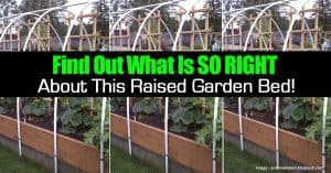 raised garden bed done right