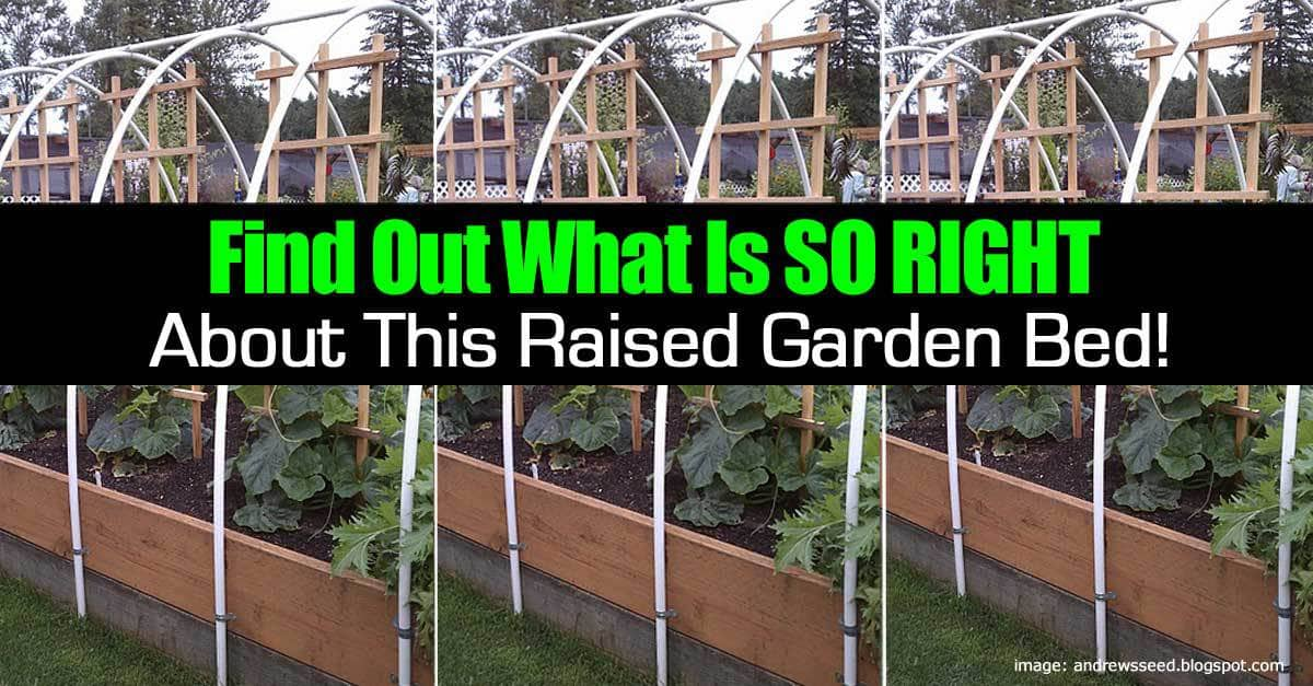 how to build a raised garden bed the right way