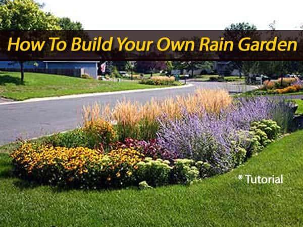 rain-garden-013114