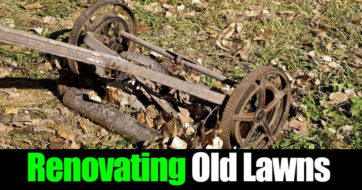 renovating-old-lawns-01312016