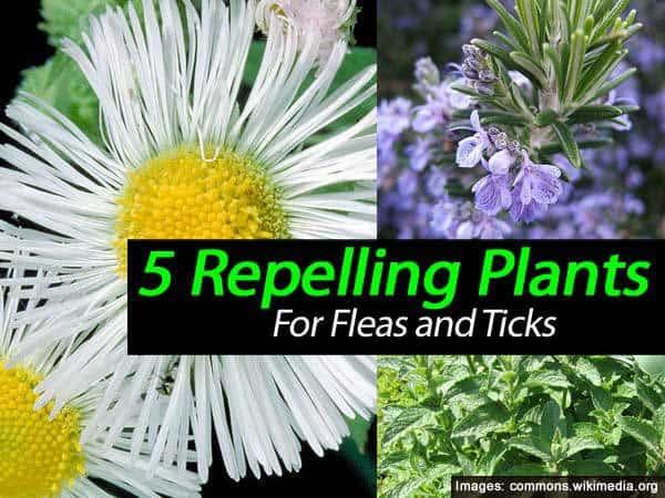 repell-fleas-ticks-031514