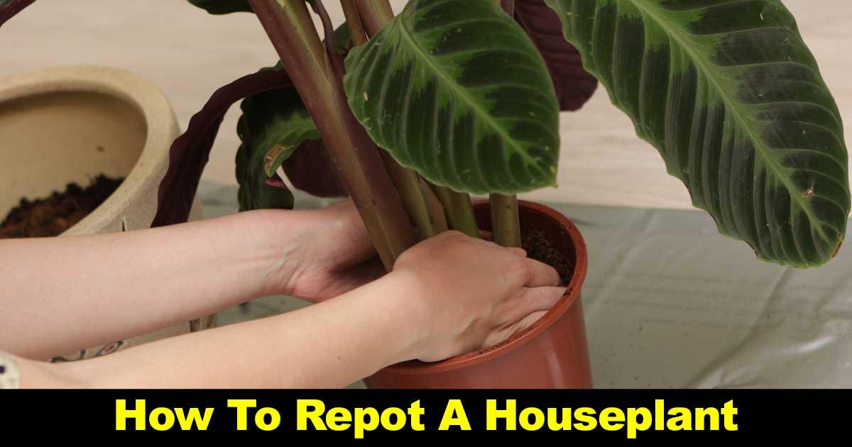 repot-houseplant-09302016