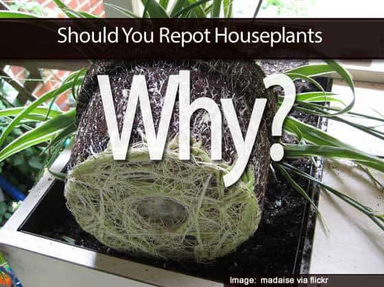 repot-houseplants-013114
